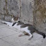 Katze in Trogir
